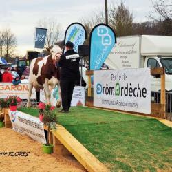 concours de vaches laitiéres