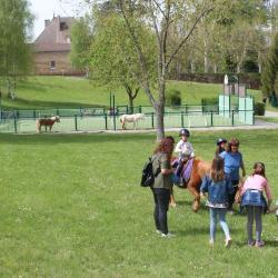 animation poney
