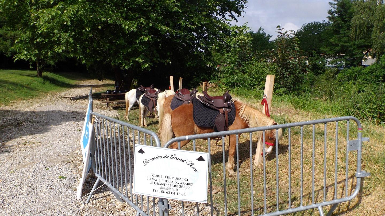 les poneys animation offerte